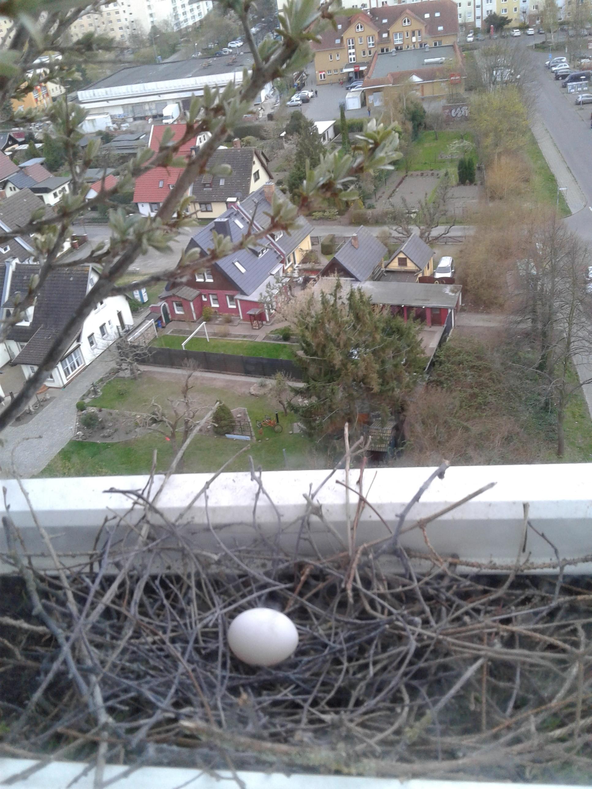 11.04.2019 - Das erste Ei