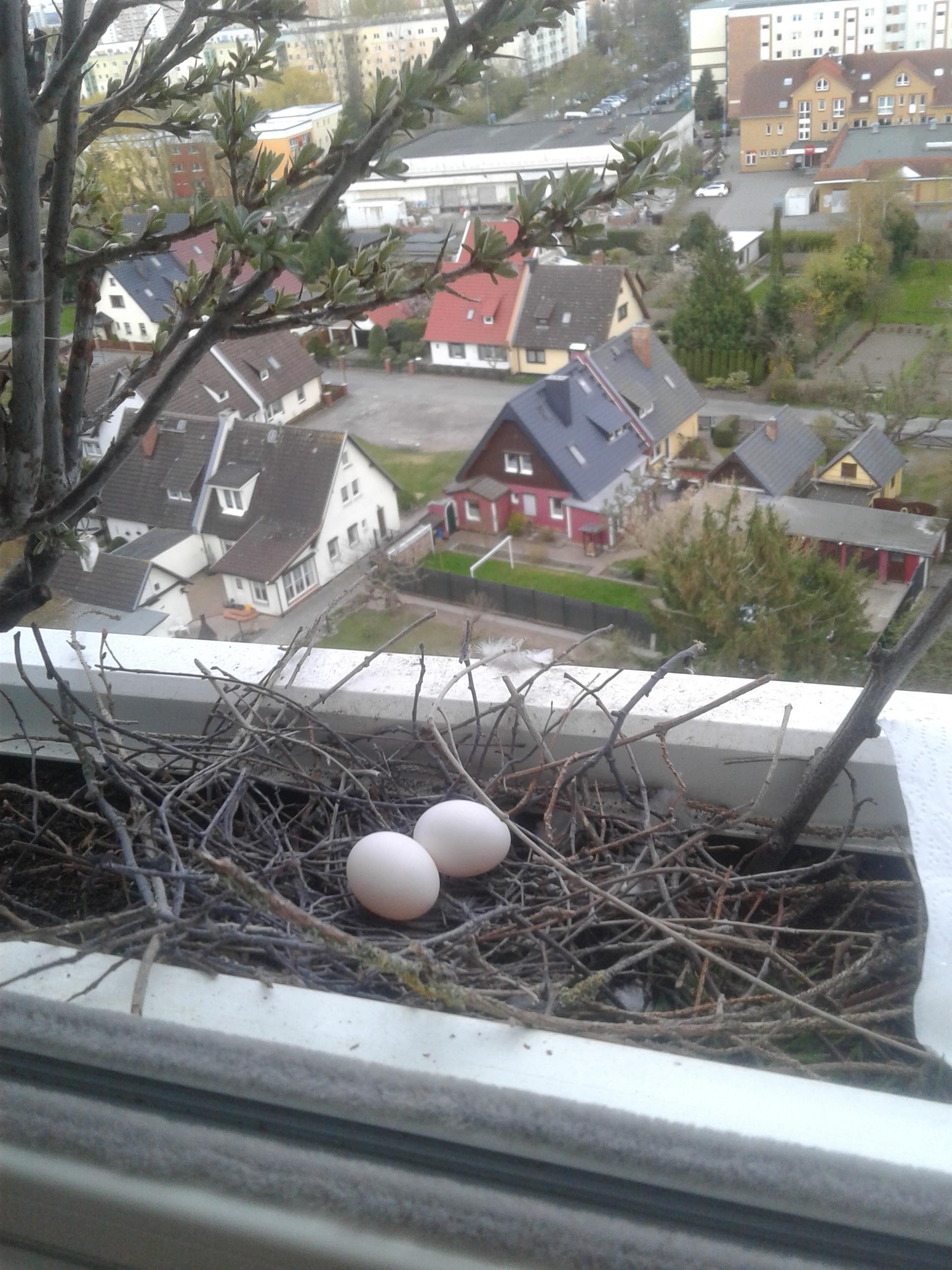 14.04.2019 - Das zweite Ei